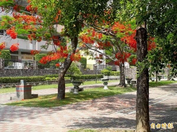 國中會考登場,南投的中興高中也是考區之一,校園裡鳳凰花開,生意盎然。(取自洪春成臉書)