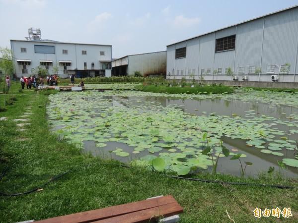 為了守護良田,避免成為工廠,光明社區志工眾志成城打造成有一大片蓮花、超美麗的「花渲光明島」(記者蘇金鳳攝)