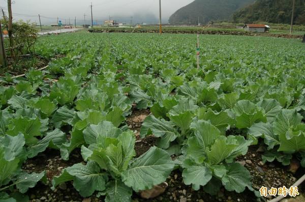 宜蘭縣大同鄉四季,南山高冷蔬菜區,是全國最大的夏季蔬菜產地。(資料照,記者江志雄攝)