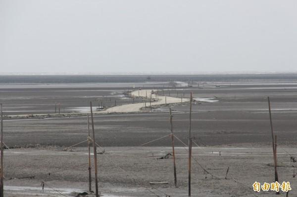 王功濕地擁有廣大潮間帶,每年吸引數十萬光光客來體驗生態。(記者陳冠備攝)