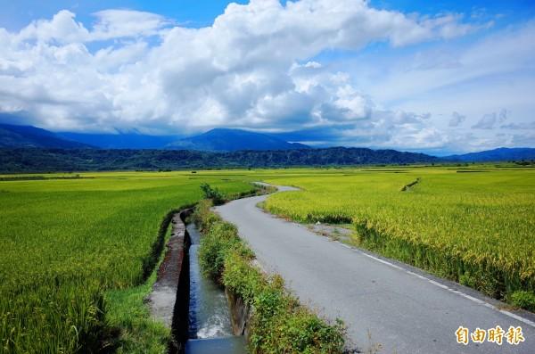 玉里一九三縣道,位於松浦碾米廠北邊的「天堂路」,景色不輸給池上天堂路。(記者花孟璟攝)