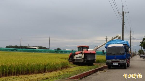 擔心會碰上致災性豪雨,農民搶收稻穀。(記者廖淑玲攝)