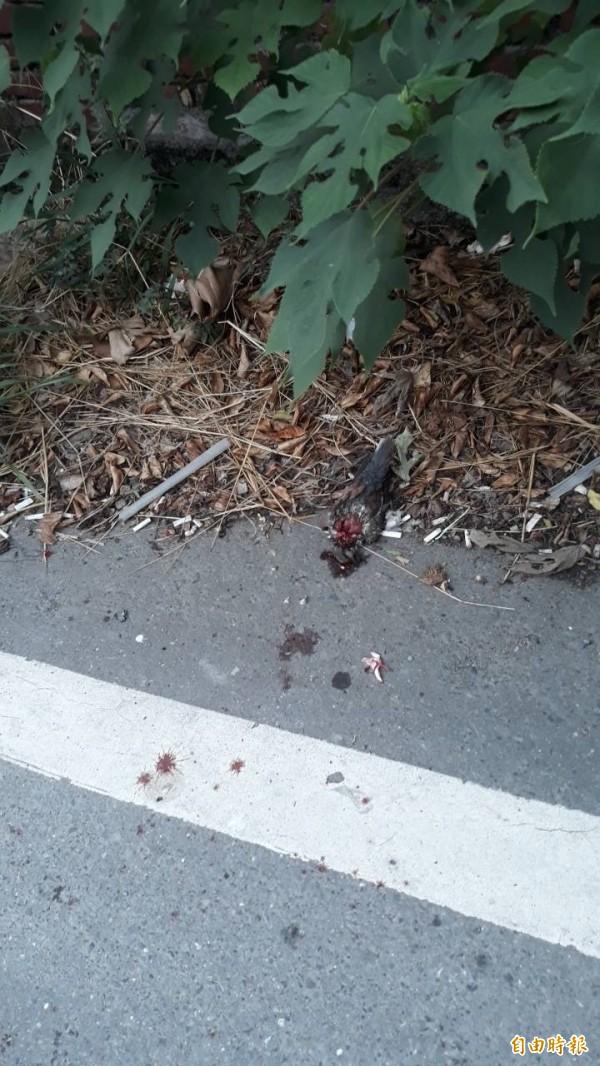 慘死的斑鳩。(記者洪定宏翻攝)