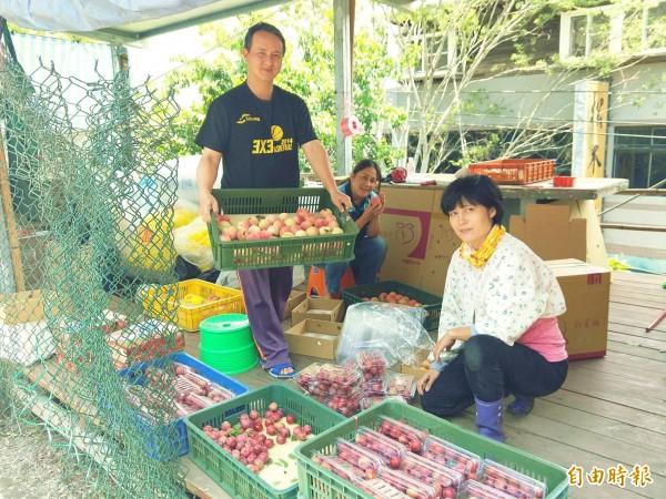 擔心豪雨造成落果,復興區拉拉山果農趁著變天前搶收早生水蜜桃,忙著分級包裝。(記者李容萍攝)