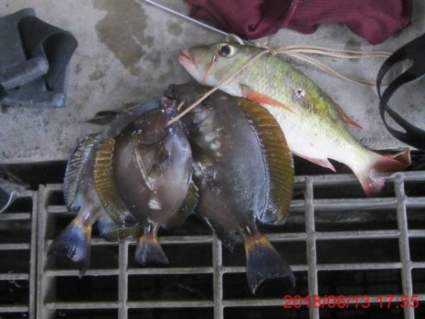 男子到墾丁保育區抓珊瑚礁魚遭罰三千。(記者蔡宗憲翻攝)