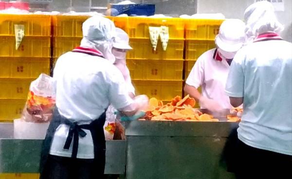 台南芒果採收季開始,為防產銷失衡,南市農業局將適時立即公告委託加工廠收購次級果,農會可加工烘乾製作芒果乾。(南市農業局提供)