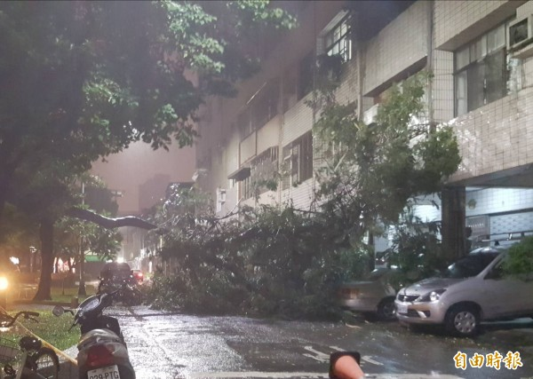 三民區褒揚街路樹倒塌。 (記者陳文嬋攝)