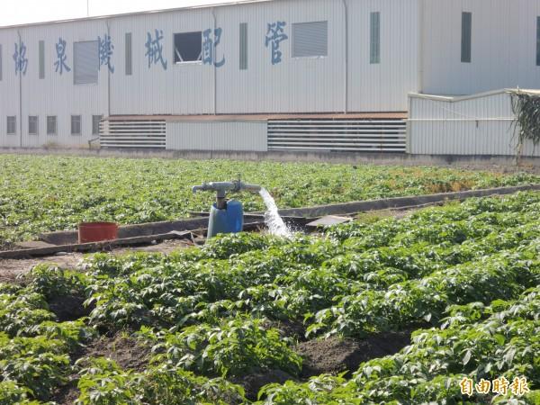 灌溉區農地自己挖井找水卻須繳規費,政策明顯出現不公平。(記者詹士弘攝)