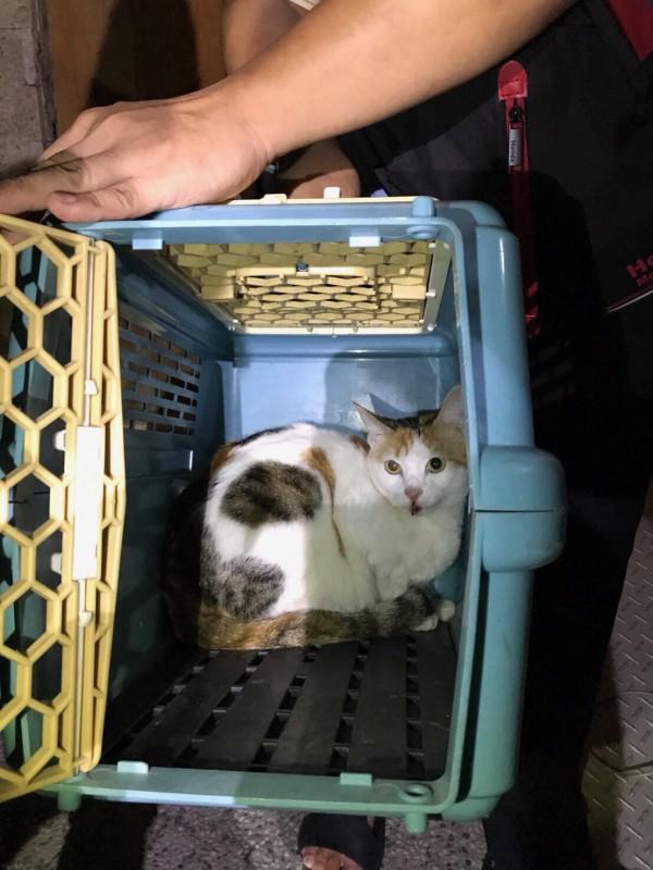劉員救出受困小花貓送醫治療。(記者許國楨翻攝)
