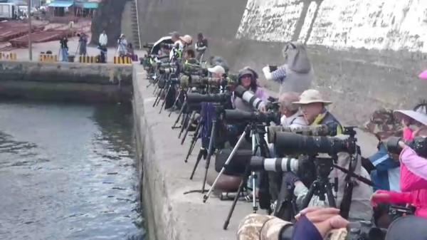 大批鳥友今天聚集頭城大溪漁港,想要拍攝卡管的鳳頭燕鷗。(記者江志雄翻攝)