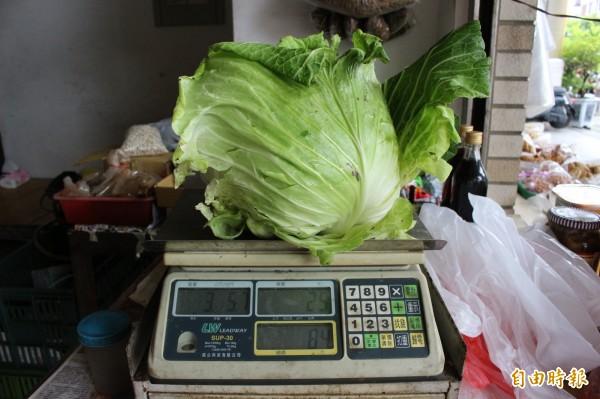 家庭主婦今到傳統市場買整顆高麗菜84元。(記者張聰秋攝)