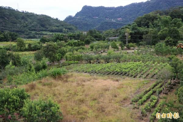 南庄鄉中港溪附近原有大片沃田,但因水圳乾涸,使得農民只能自行接水灌溉,相當不便。(記者鄭名翔攝)