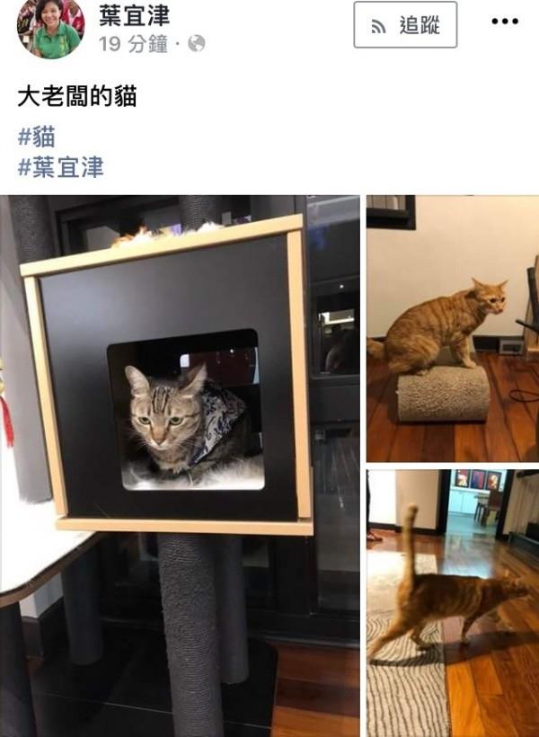 立委葉宜津把蔡英文的貓咪放上臉書。(擷取自葉宜津臉書)