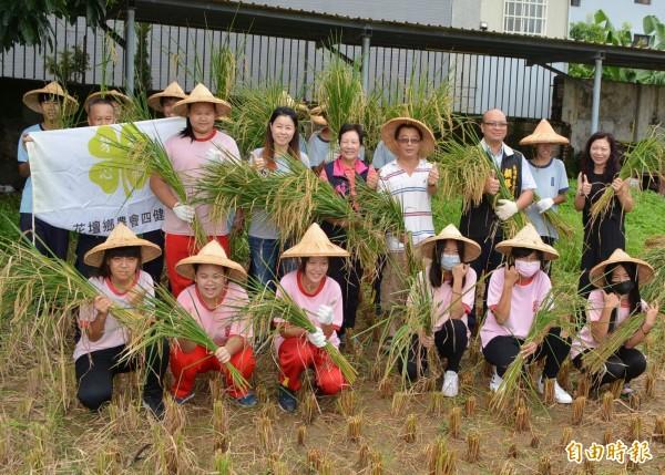 花壇國中學生3月時插秧,現在稻米成熟,今天與農會人員一起收割,大家都非常開心。(記者湯世名攝)