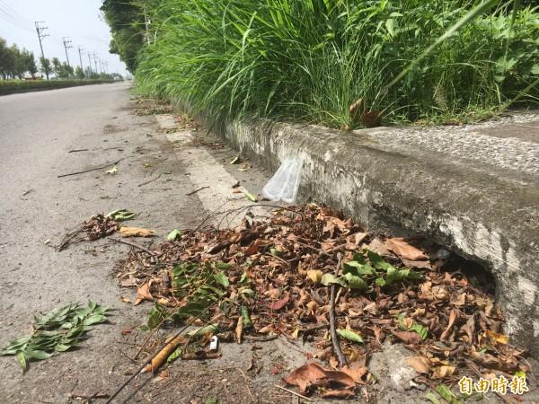 有民眾指出,道路排水孔被落葉堵塞是日前彰化地區淹大水的主因之一。(記者顏宏駿攝)