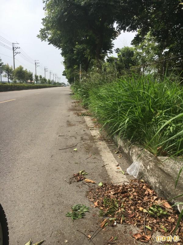 許多道路排水孔被落葉堵塞。(記者顏宏駿攝)