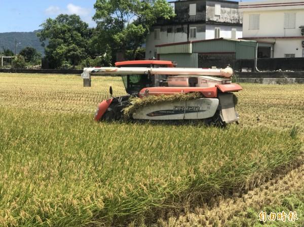 強烈颱風「瑪莉亞」來勢洶洶,預計將帶來可觀雨量,花蓮農民進入備戰狀態,搶收一期稻作。(記者王峻祺攝)