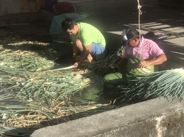 農民洗蔥。(記者江志雄翻攝)