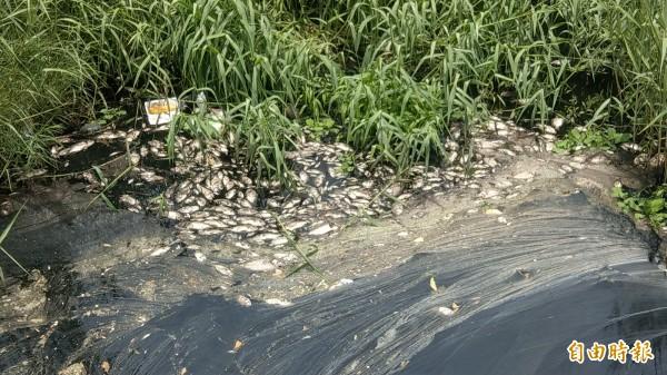 苑裡中溝溪水黑如墨、魚群翻肚惹民怨,環局再採樣。(記者蔡政珉攝)