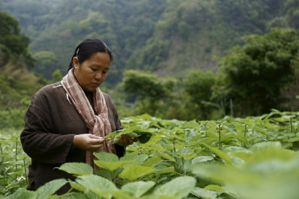 尤瑪.達陸傳承泰雅傳統編織,被譽為人間國寶。(原民會提供)