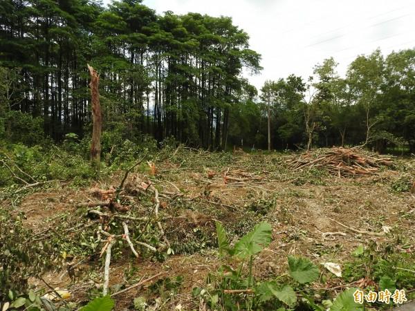 部分土地上的樹木已經完全砍除,將進行活化利用。(記者佟振國攝)