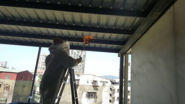 消防隊員協助處理民宅的蜂巢。(記者徐聖倫翻攝)