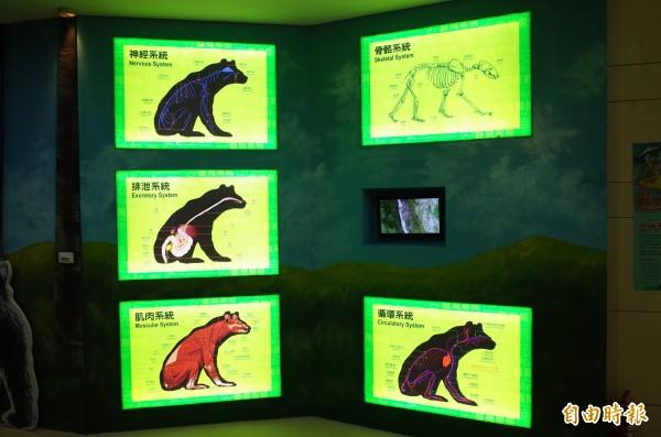 5張臺灣黑熊身體構造解說的圖片過於簡單,也缺乏解說,中間的「小螢幕」則是去年山風吊橋下方有黑熊出沒的影片,不過螢幕週邊都沒有文字解說,沒有標示時間地點。(記者花孟璟攝)