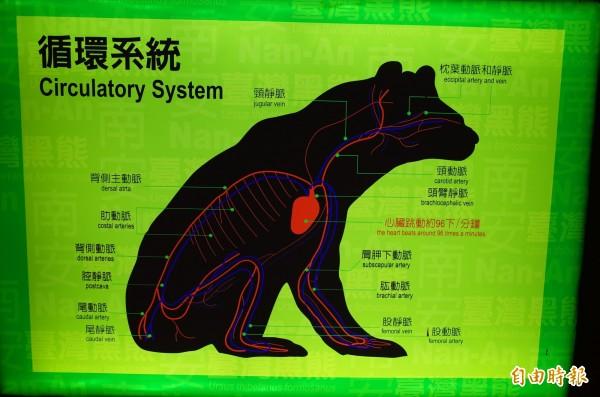 玉山國家公園南安遊客中心的黑熊「循環系統」介紹圖片。(記者花孟璟攝)