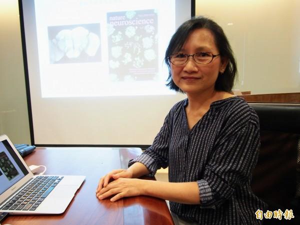 中研院細胞與個體生物學研究所助研究員周雅惠研究團隊,利用果蠅大腦中處理嗅覺的神經細胞,建立一套基因篩選平台。(記者簡惠茹攝)