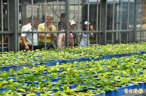 透過自動化設備或輔具,人不必到溫室內,也能進行相關的栽培管理。(記者吳俊鋒攝)