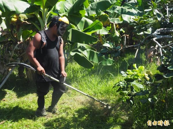 林務局關山工作站每個月定期協助聖十字架療養院砍草。(記者王秀亭攝)