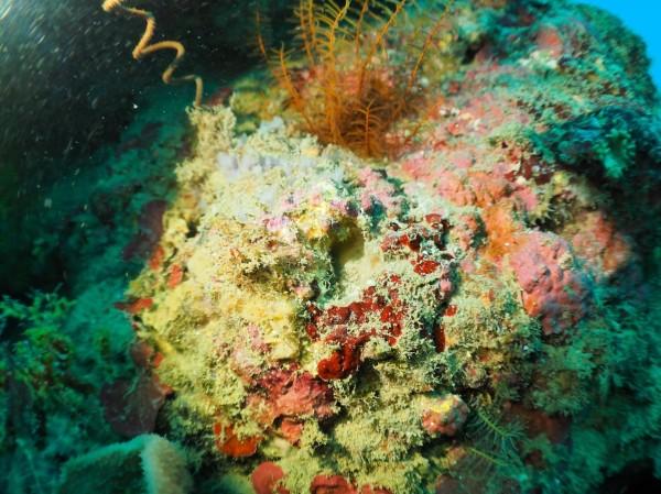 獨立礁上的海扇及豆丁海馬不翼而飛。(記者蔡宗憲翻攝)