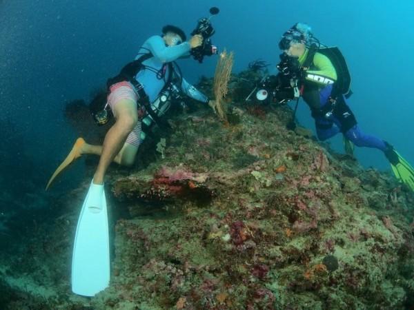 獨立礁上的海扇有豆丁海馬棲息,常吸引潛客拍照。(記者蔡宗憲翻攝)