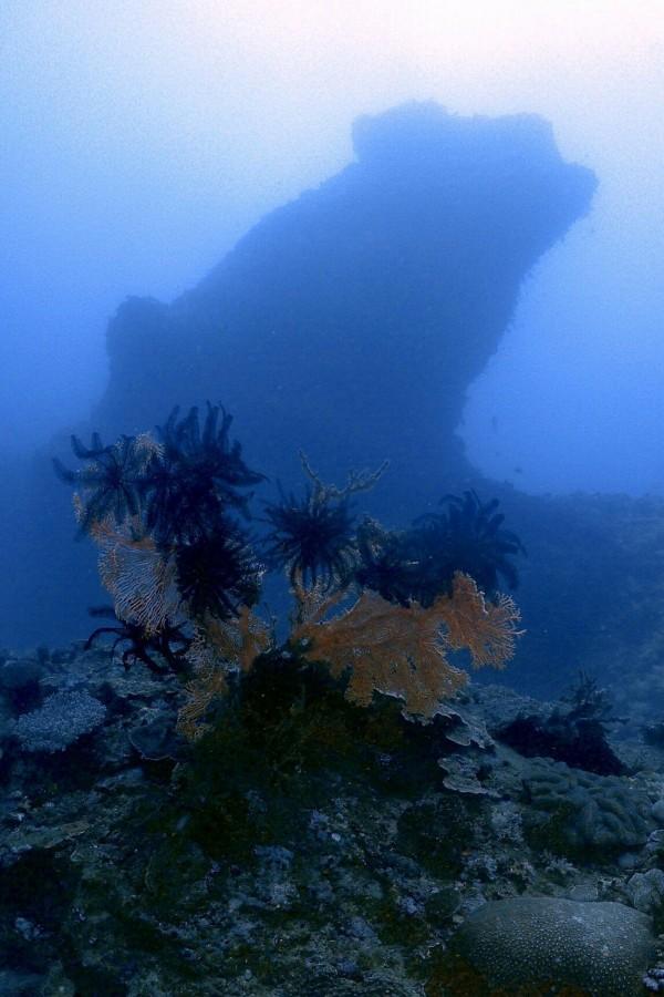 後壁湖獨立礁海域以海扇及豆丁海馬聞名。(記者蔡宗憲翻攝)