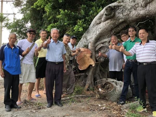 在地方人士努力下,老榕樹可望恢復往日榮景。(記者鄭名翔翻攝)