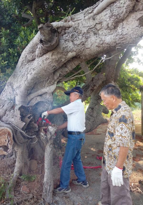 志工們切除枯萎的枝幹。(記者鄭名翔翻攝)