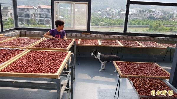 陳淑慧與愛犬Mia,在樓頂的曬紅棗間。(記者彭健禮攝)
