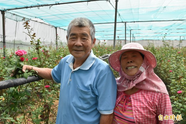 80歲林等昌與75歲林陳三枝栽種玫瑰花20年,開放給民眾自助採摘。(記者黃淑莉攝)