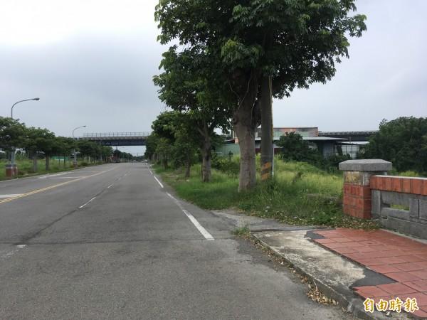 和興路上的路樹落花落果常影響行車安全,竹南鎮公所擬移除。(記者鄭名翔攝)