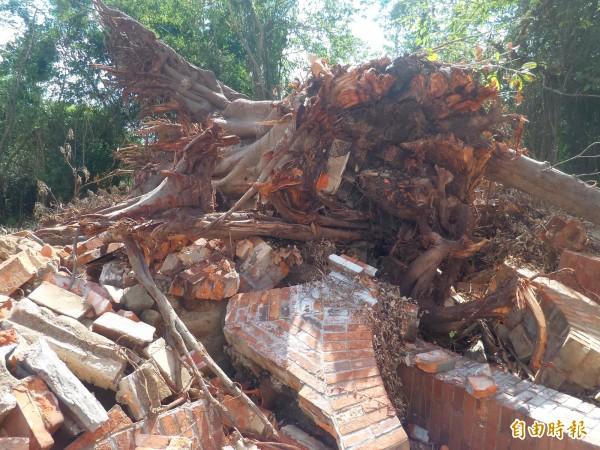 現場仍可看見張氏三合院原本被老樹包圍的牆柱。(記者廖雪茹攝)