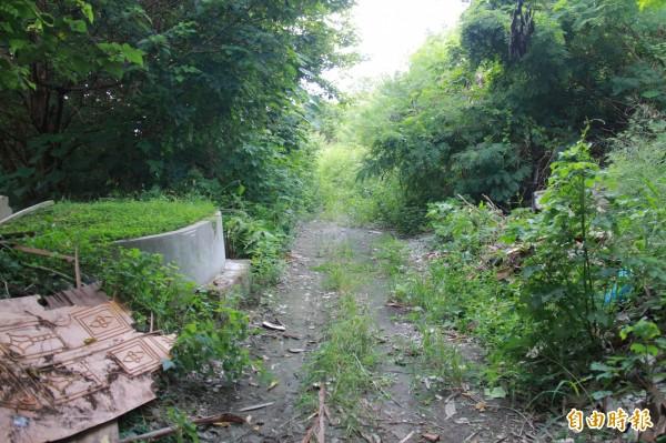 埔鹽鄉第一公墓禁葬20年,墓地缺乏綠化,雜草叢生。(記者陳冠備攝)