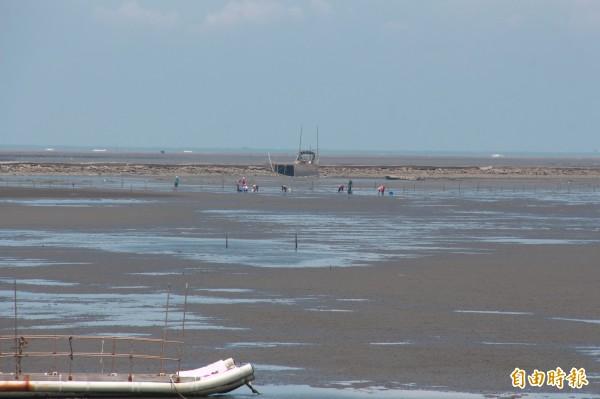彰化濕地資源豐富,是當地漁民養殖文蛤、牡蠣維生。(記者陳冠備攝)