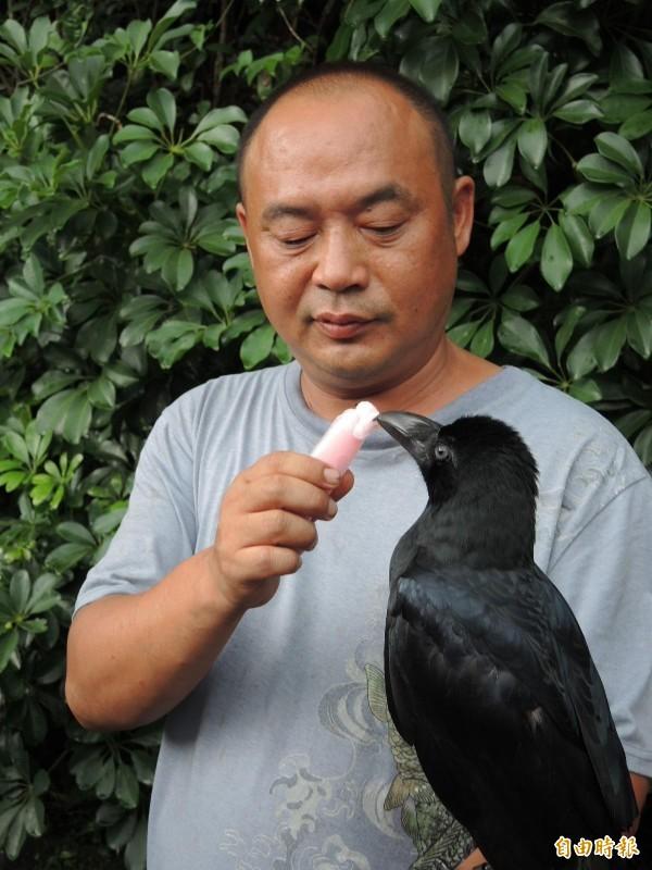 陳嘉正餵「小黑」吃冰。(記者翁聿煌攝)