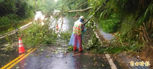 台7線10公里處的路樹樹枝斷裂,一度採單線通行管制,經工程人員移除後恢復雙線通車。(記者李容萍攝)