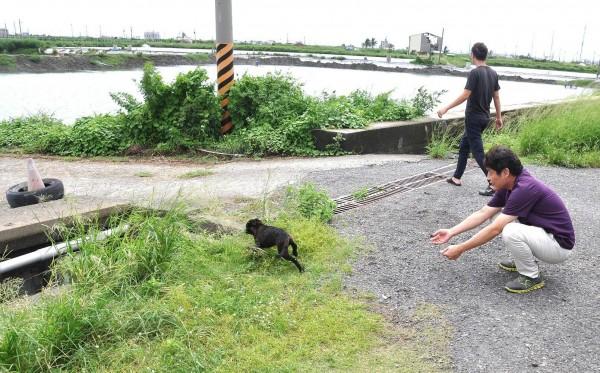 小黑狗引志工搶救落水幼犬。(台灣動物緊急救援小組提供)