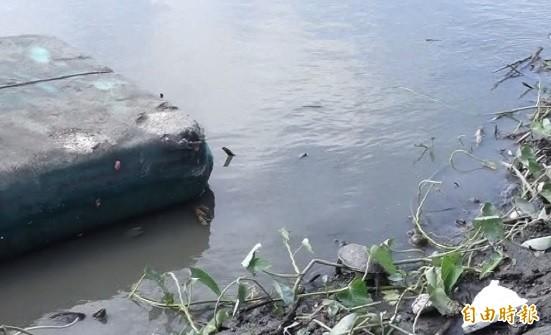 「龜公園」名字由來,就是水池有烏龜。(記者劉曉欣攝)