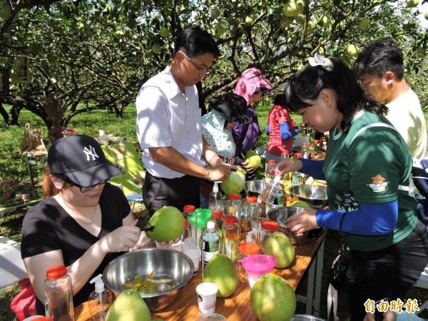 現在正是文旦產季,一日農遊可前進東河鄉果園體驗柚子DIY。(記者張存薇攝)
