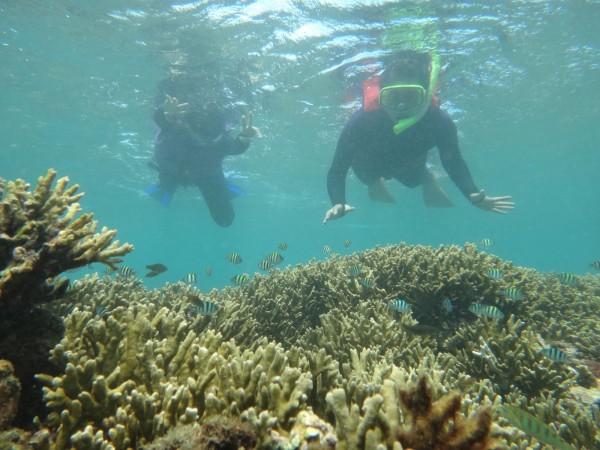 後壁湖海域珊瑚原來的七彩美麗模樣。(記者蔡宗憲翻攝)