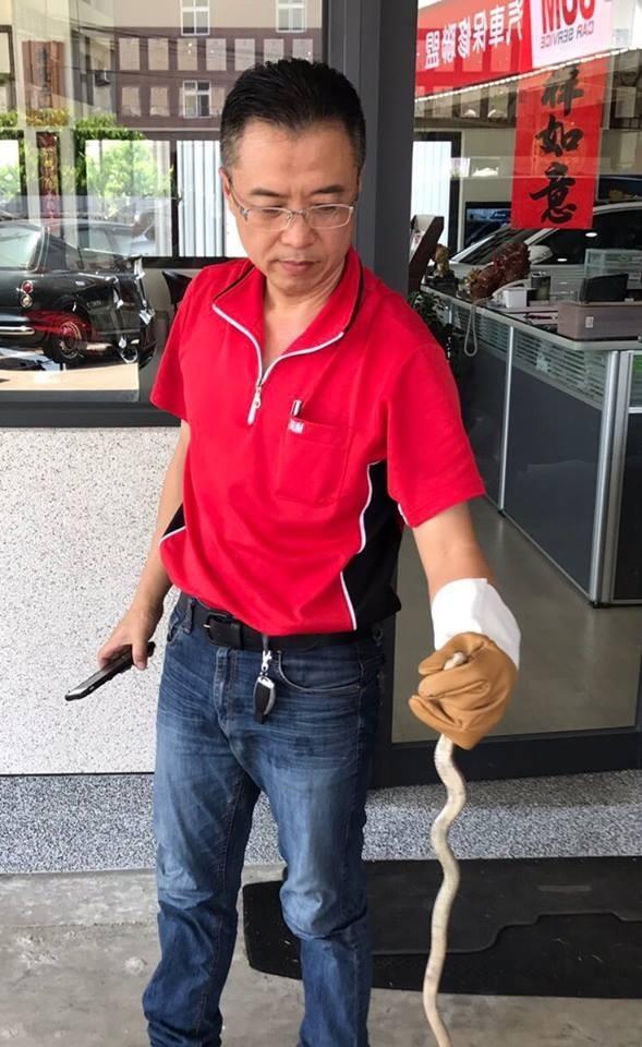 修車廠業務經理陳志宏英勇抓蛇。(陳永聰提供)