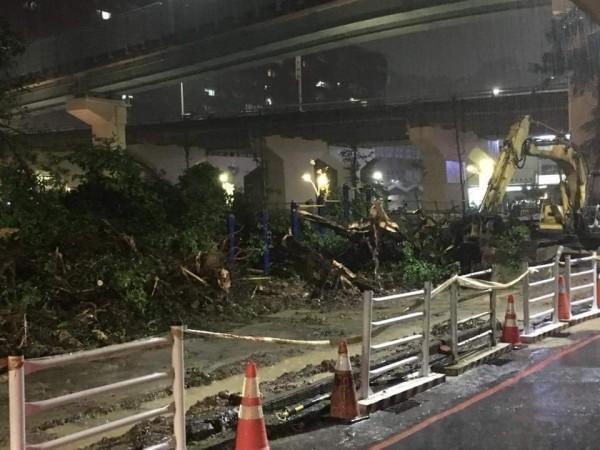 基隆市政府進行成功國小周邊通學步道改善工程,遭投訴砍除整排3、40年十多棵老榕樹。(陳姓校友提供)